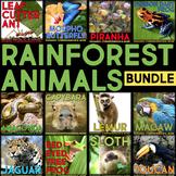 Rainforest Animals: Article, QR Code Research Page & Fact Sort BUNDLE