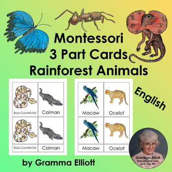 Rainforest Animals – Montessori 3 Part Cards – English Only