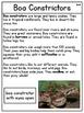 Rainforest Animals Nonfiction Reading Passages