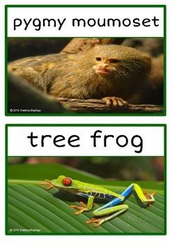 Rainforest Animals Photo Set