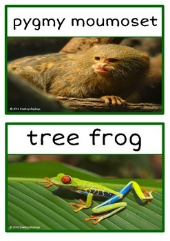 Rainforest Animals Photo Set