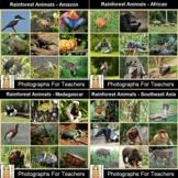Rainforest Animals Photograph Bundle