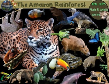 Rainforest Clip Art Animals & Plants Habitats Biome Real Clips Photo & Artistic