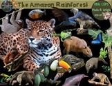 Rain Forest Clip Art Animals & Plants Habitats Biome Rainf