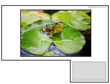 """Rainforest Animals Real Photo """"I See"""" Book for Special Education Classrooms"""