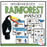 Rainforest Animals Real Photos