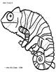 Rainforest Animals - Silent Puzzles