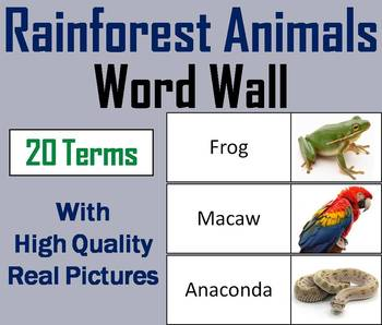 Rainforest Animals Word Wall Cards