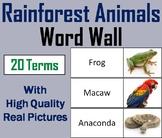 Rainforest Animals Word Wall Cards