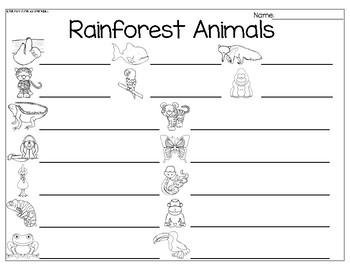 Rainforest Animals Write the Room