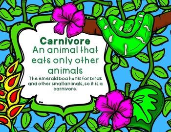 Rainforest Animals and Diet Herbivore Omnivore or Carnivore