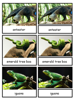 Rainforest--Animals of South America Montessori 3-part cards