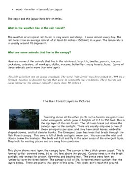 Rainforest Article and Brochure Activity