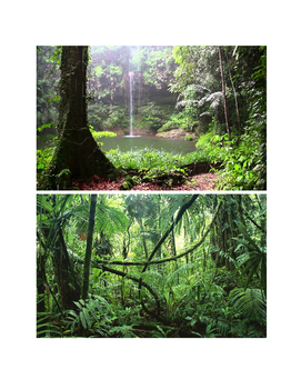 Rainforest Biome Teacher's Resource Guide & Pictures