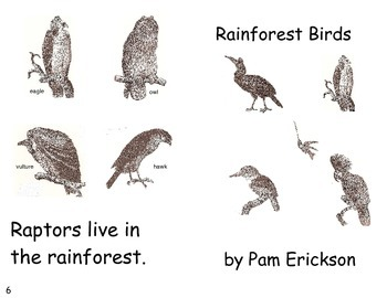 Rainforest Birds- a non-fiction guided reading book