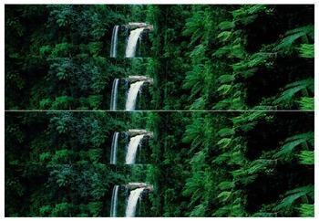 Rainforest Border