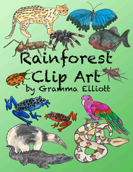 Rainforest Clip Art - Semi - Realistic - 84 clips - Color and BW - 300 DPi PNG