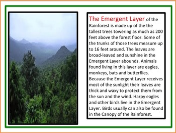 Rainforest Curriculum:  100 pages for a month-long study of the Rainforest