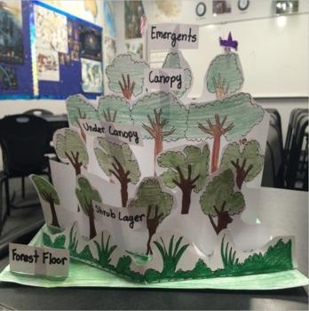 Rainforest Layers Diorama Craftivity