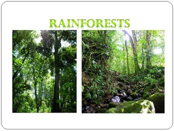 Rainforest Environments