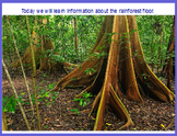 Rainforest Floor Flipchart