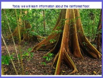 Rainforest Floor Flipchart
