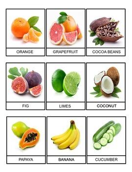 Rainforest Food Cards