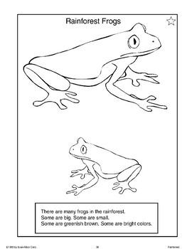Rainforest Frogs