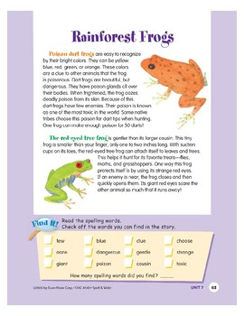 Rainforest Frogs