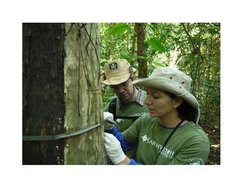 Rainforest Gallery Walk