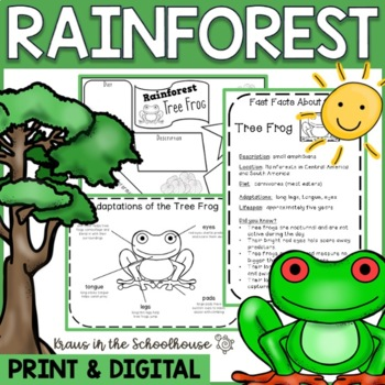 Rainforest Habitat Research Activities and Graphic Organizers