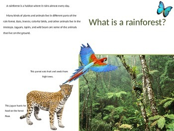 Rainforest Habitat Power Point