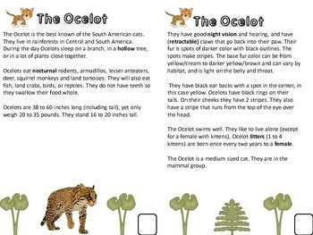 Rainforest Habitat and Animal Research and Narrative Writing