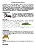 Rainforest Information Cards and Worksheets