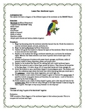 Rainforest Layers Lesson Plan