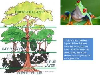 Rainforest Layers Powerpoint