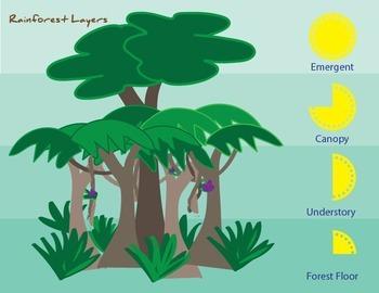 Rainforest Layers Printable Poster