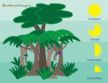 graphic about Layers of the Rainforest Printable called Rainforest Levels Printable Poster