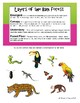 Rainforest Layers worksheet
