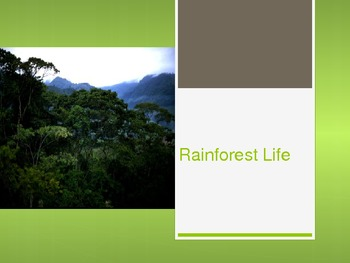 Rainforest Life Powerpoint