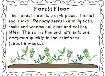 Rainforest Literacy, Science and Geography MEGA resource