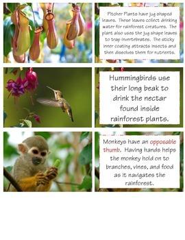 Rainforest MINI UNIT