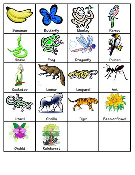 Rainforest Memory Game