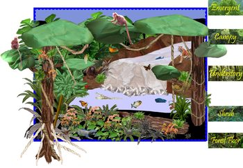 Rainforest Mural Directions (Included in Rainforest: Maps, Mural, Museum)