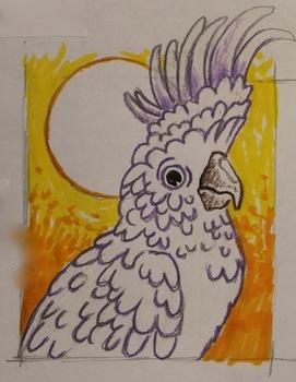 Rainforest Parrots, Toucans and Such