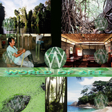 Rainforest Photo Clip Art Sampler
