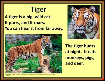 Rainforest Plants & Animals Display Cards (Included~Rainforest-MapMuralMuseum)