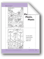 Rainforest Plants: Take-Home Book