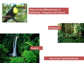 Rainforest Powerpoint