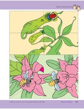 Rainforest Puzzles